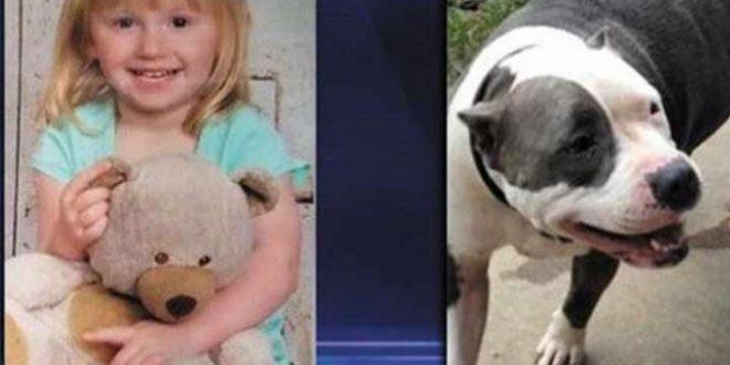 Niña de dos años es rescatada por su perrita pitbull